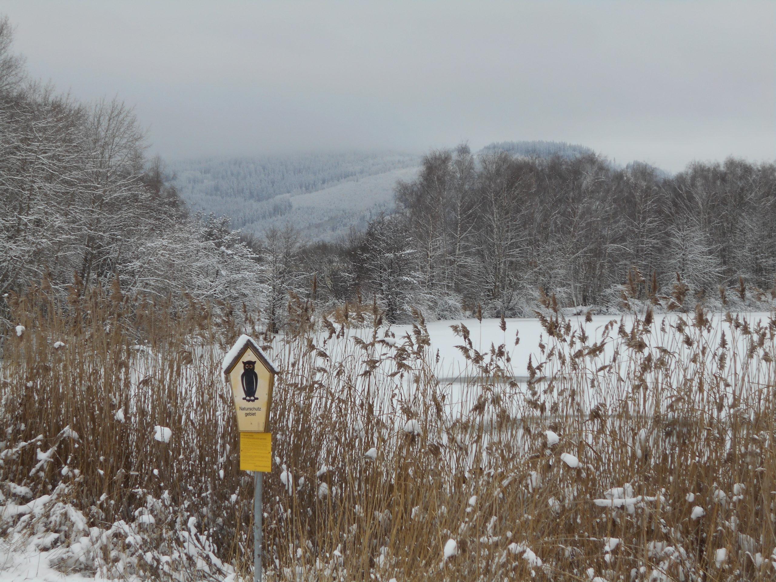 Winter Lake Ilmenau